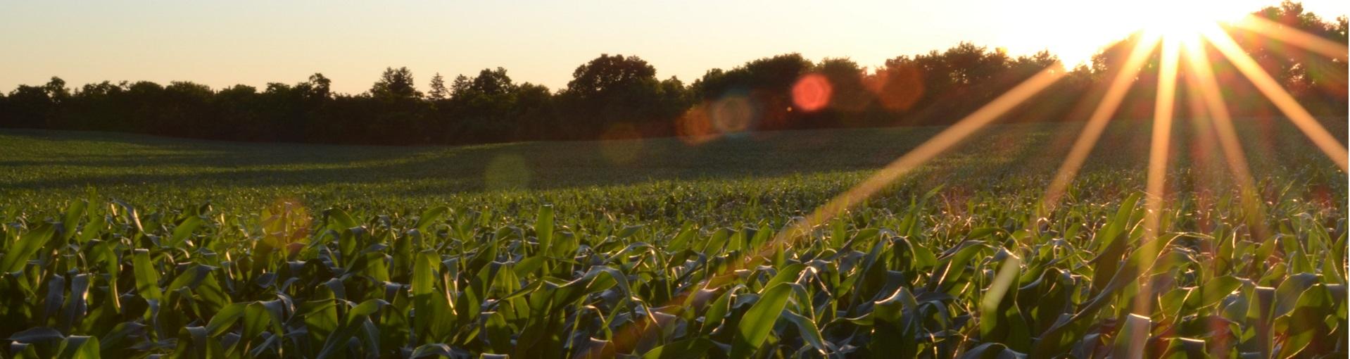 Farm land
