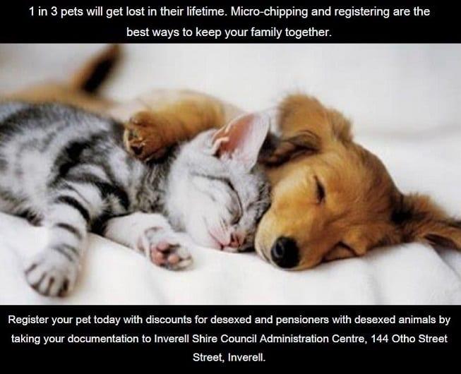 Companion Animals Registration Discounts Ad