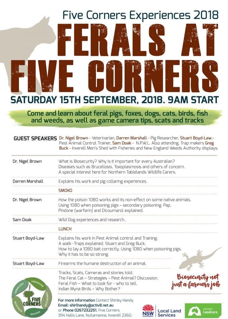 Ferals at Five Corners